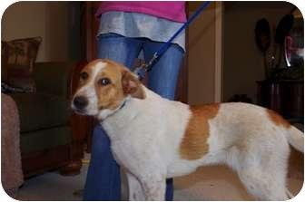 Shepherd (Unknown Type) Mix Puppy for adoption in White Plains, New York - Sally G
