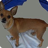Adopt A Pet :: Holly - Tumwater, WA