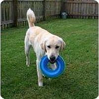 Adopt A Pet :: Buster - Altmonte Springs, FL