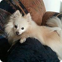 Adopt A Pet :: CASH - Hesperus, CO