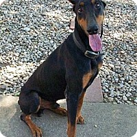 Adopt A Pet :: Dobie--adopted!! - New Richmond, OH