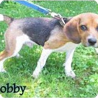 Adopt A Pet :: Bobby COURTESY - Indianapolis, IN