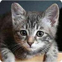 Adopt A Pet :: Nina - Portland, OR