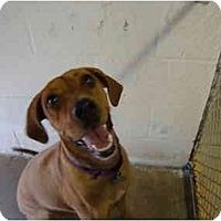 Adopt A Pet :: Frieda - Winter Haven, FL