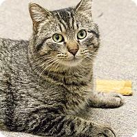 Adopt A Pet :: Dally - Chicago, IL