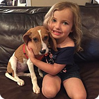 Adopt A Pet :: Ella - Marietta, GA