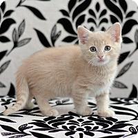 Adopt A Pet :: Muenster - St. Louis, MO