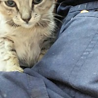 Adopt A Pet :: Jake - Miami, FL