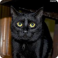 Adopt A Pet :: Leisel - Medina, OH
