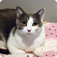 Adopt A Pet :: Winnie - Lincoln, NE