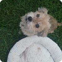 Adopt A Pet :: Lady - Benton, PA