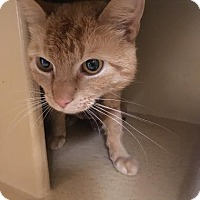 Adopt A Pet :: Reginold - Menands, NY