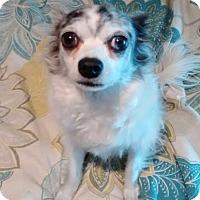 Adopt A Pet :: Suzie - Santee, CA