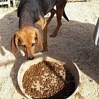 Adopt A Pet :: Zelda - Staunton, VA