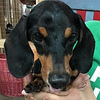 Adopt A Pet :: Boomer - Centerville, GA
