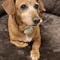 Adopt A Pet :: Ella - Weston, FL