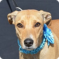 Adopt A Pet :: Chewy - Plano, TX