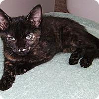 Adopt A Pet :: Tiny - Delray Beach, FL
