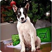 Adopt A Pet :: Brooks - Owensboro, KY