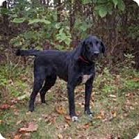 Adopt A Pet :: Bradley - Lewisville, IN