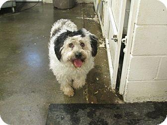 Terrier (Unknown Type, Medium) Mix Dog for adoption in Dodge City, Kansas - Wanda Girl