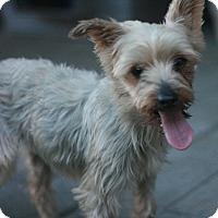 Adopt A Pet :: Susie - Canoga Park, CA