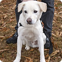 Adopt A Pet :: Kennedy - Cumming, GA