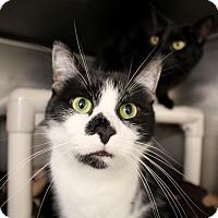 Adopt A Pet :: Clint - Chicago, IL