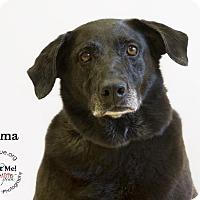 Adopt A Pet :: Cosma - Phoenix, AZ