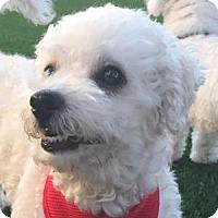 Adopt A Pet :: Casper - La Costa, CA