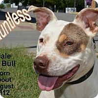 Adopt A Pet :: Dauntless - Richmond, MO