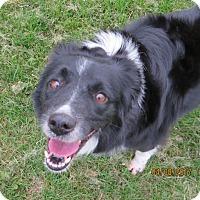 Adopt A Pet :: COCOA **adoption pending!** - Nampa, ID
