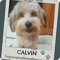 Adopt A Pet :: CALVIN - Lincoln, NE