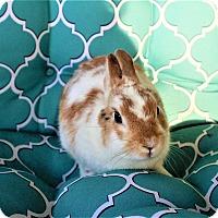 Adopt A Pet :: Mickey - Hillside, NJ