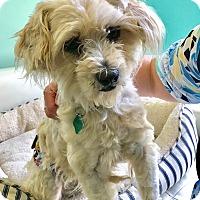 Adopt A Pet :: Alfie - San Francisco, CA