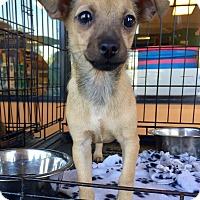 Adopt A Pet :: Lolita - Santa Ana, CA