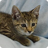 Adopt A Pet :: Albany - Morgantown, WV