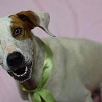 Adopt A Pet :: Houston - Walton County, GA