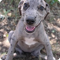 Adopt A Pet :: Emory - Pipe Creed, TX