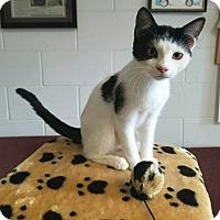 Adopt A Pet :: Mahi - Umatilla, FL