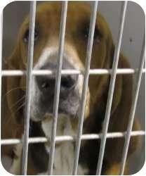 Hound (Unknown Type) Mix Dog for adoption in Olathe, Kansas - Ernest