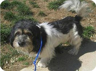 Basset Griffon Vendeen Mix Dog for adoption in Delaware, Ohio - Wags