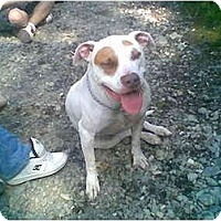 Adopt A Pet :: Bubbies - Bakersfield, CA