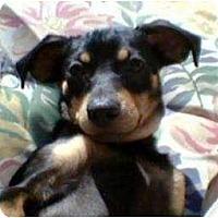 Adopt A Pet :: Jake & Camy (Jake) - Duluth, GA