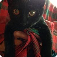 Adopt A Pet :: Leonard - St. Louis, MO