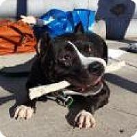 Adopt A Pet :: Louise - Park Ridge, NJ