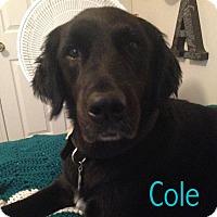 Adopt A Pet :: Valrico, Fl - Cole - Boca Raton, FL