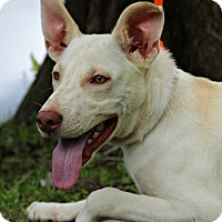 Adopt A Pet :: Wade - Pawling, NY