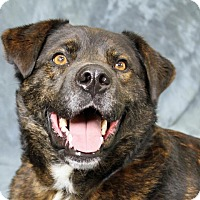 Adopt A Pet :: Coors - Joliet, IL