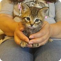 Adopt A Pet :: Harry - Avon, NY